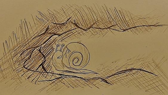 一颗小蜗牛